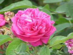 bloemen kunnen praten wikipedia